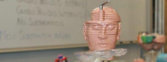 """Wissenschaftlich fundiert, aber spielerisch den komplexen Zusammenhang des Gehirns verstehen – das erwartet die Teilnehmer bei """"Anatomie und Funktionsweise des menschlichen Gehirns"""""""